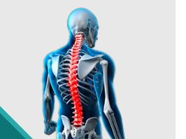 RX Digital Panorâmico da Coluna Vertebral - Urc Diagnósticos | Exames e Diagnóstico médico por Imagem - Criciúma